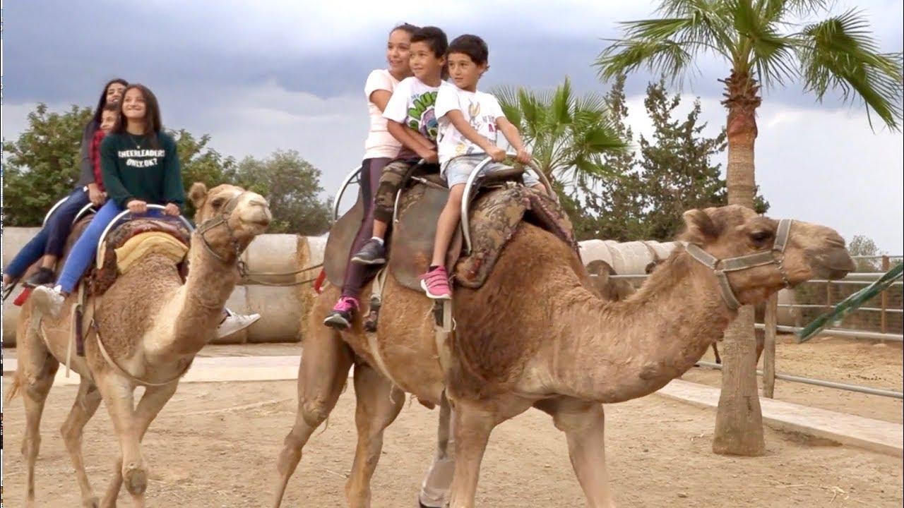 Fun Day Out to the Camel Park, Mazotos, Larnaca