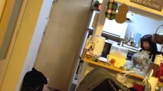 ロックンロールに目覚めたチビ(1才2ヶ月)の近況をランシドの曲にのせて.