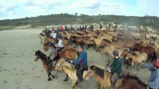 Transhenson : la transhumance des chevaux Henson