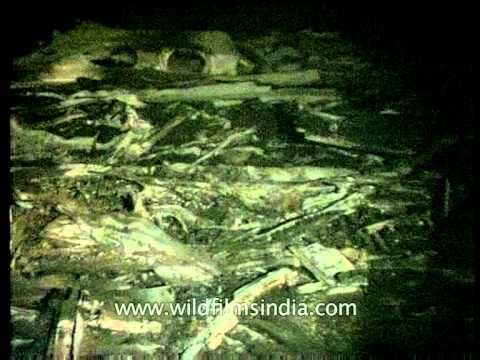 Charkhi dadri mid-air collision photos