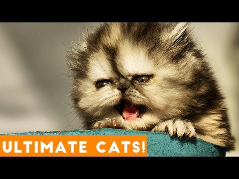 Ultimate FUNNY CAT and KITTEN Compilation of 2018 | Funny Pet Videos