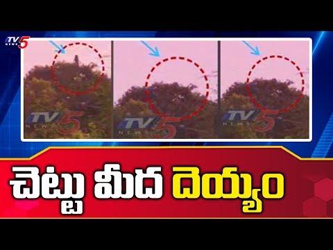 చెట్టు మీద దెయ్యం | Video Goes Viral On Social Media | TV5