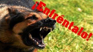 El perro. Video motivacional - ¿Qué te cuento?