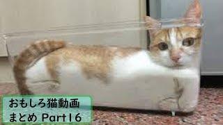 面白くて可愛い猫【仕草 鳴き声】のまとめ動画Part16! ぜひチャンネ...