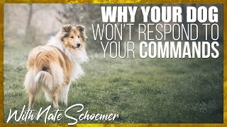 Why Your Dog Doesn't Respond to Your Commands.