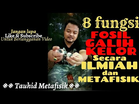 8 Fungsi Fosil Galih Kelor  Penjelasan Secara Ilmiah dan Metafisik.Minat Hp/WhatsApp :0858~1688~0424