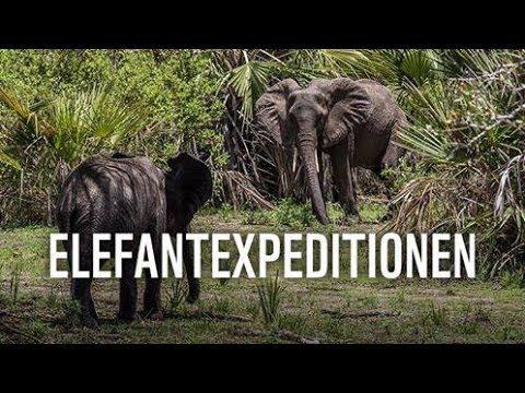 WWF FACEBOOK TV - ELEFANTEXPEDITIONEN