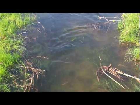 рыбалка в астраханской области на воблу