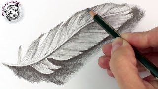 How to Draw a Feather with Pencil | Drawing Techniques Narrated in Spanish