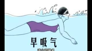 蛙泳教學2