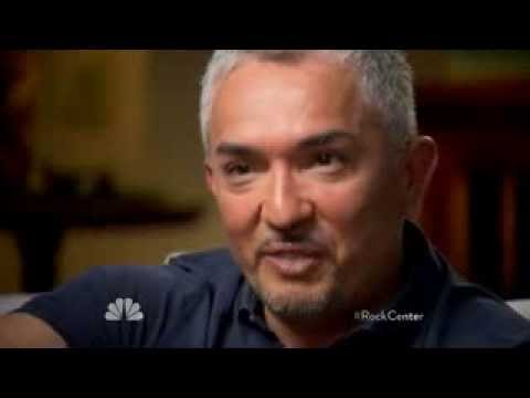 Bitten by Tragedy  Cesar Millan s Dog Whisperer""