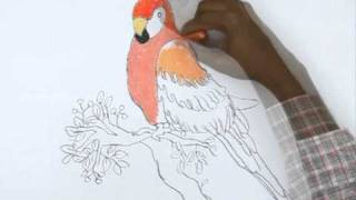 How to Draw a Macaws Parrot
