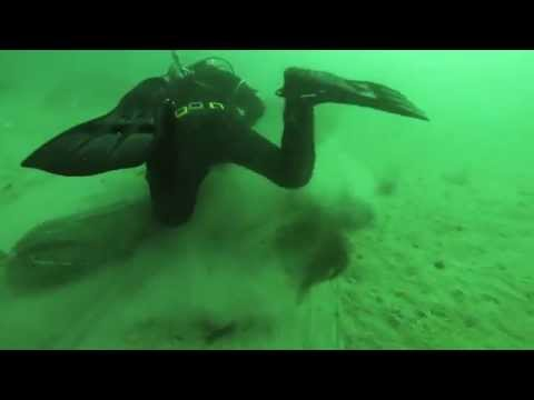Video A1: Diver collecting razor clams following an electric rig