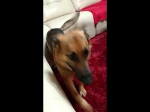 Jealous Dog Goes Crazy!!