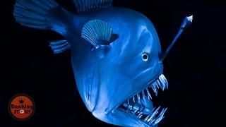 미지의 해저에 사는 심해 생물들 [눈나 랭킹]