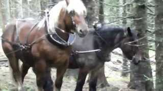 Débardage a cheval ENS Bout 09 2015