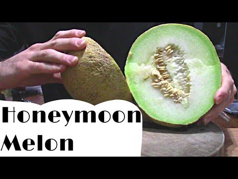 Honeymoon Melon: The Cantaloupe That Is Green Inside  - Weird Fruit Explorer