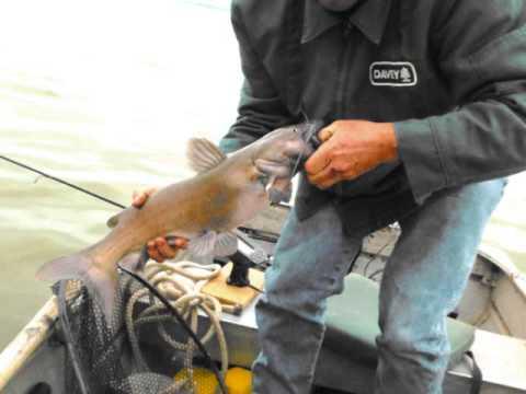 Sandusky bay cat fishing spring 2013 slide show mr for Sandusky bay fishing