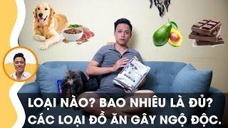 Chăm Chó - Tập 02: Hướng dẫn chọn thức ăn và chế độ ăn tiêu chuẩn cнo cún con