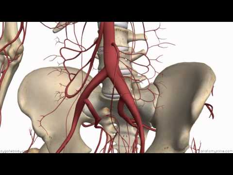Inferior Mesenteric Artery - Anatomy Tutorial