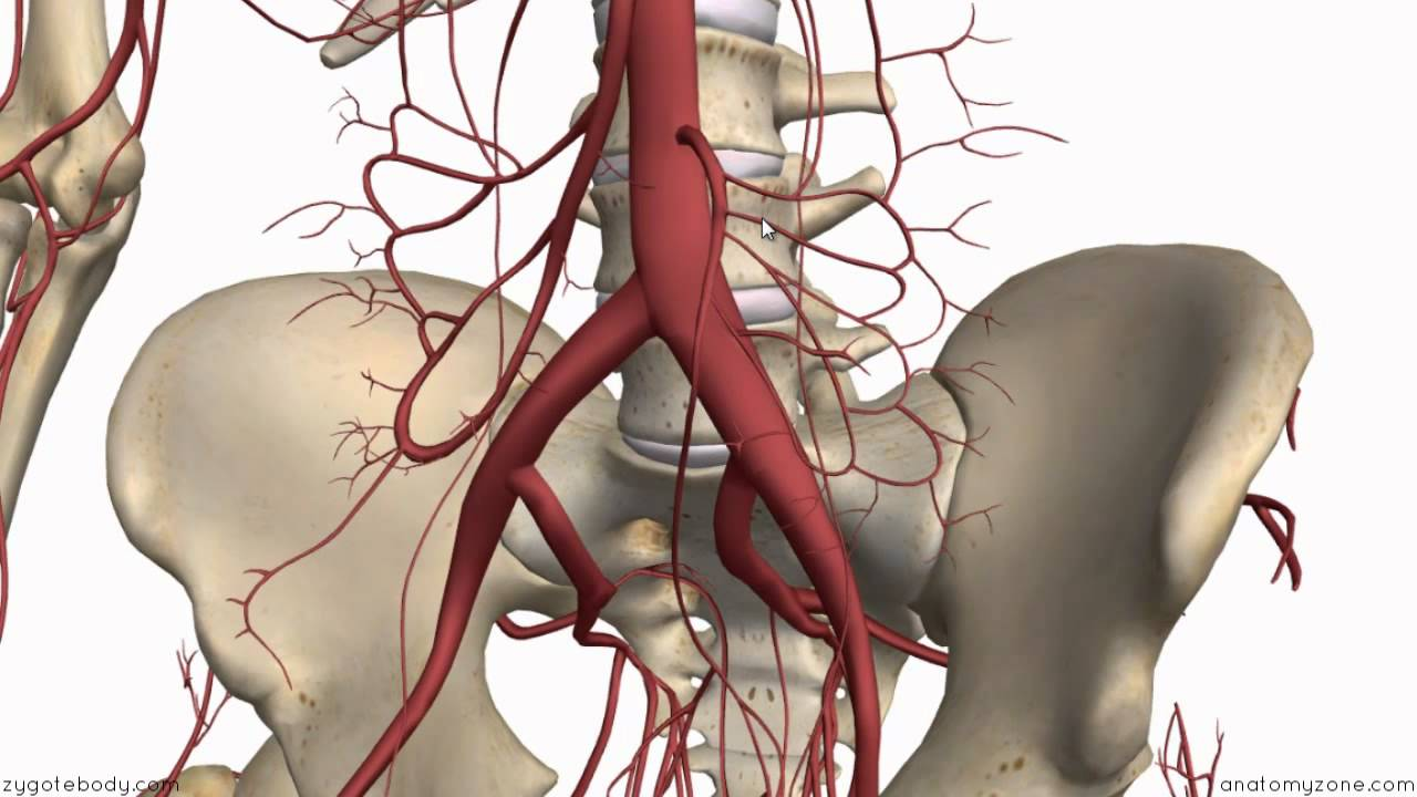 Inferior Mesenteric Artery Anatomy Tutorial Youtube