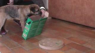 Easy, Border Terrier : Jeux De Patience