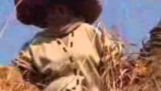 Mai Charamba - Ruth