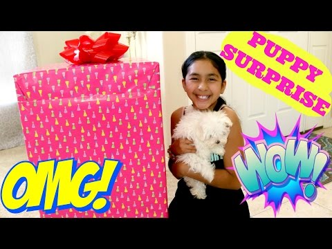 Thumbnail: PUPPY SURPRISE!! UNBOXING THE MOST AMAZING SURPRISE |B2cutecupcakes