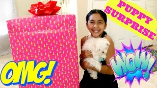 PUPPY SURPRISE!! UNBOXING THE MOST AMAZING SURPRISE |B2cutecupcakes