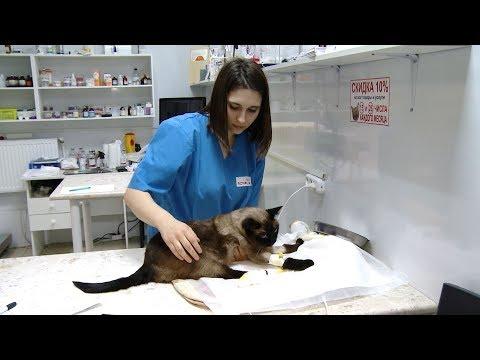 Казуистика или халатность: как грамотно выбрать ветеринарного врача в Краснодаре