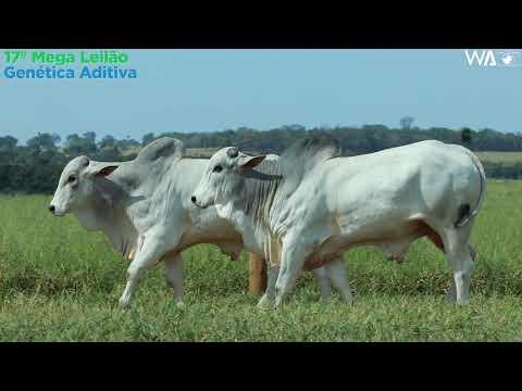 LOTE 139 - DUPLO - REM 10090, REMP 700 - 17º Mega Leilão Genética Aditiva 2020