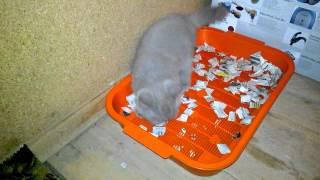 как сделать чтобы котенок сходил в туалет