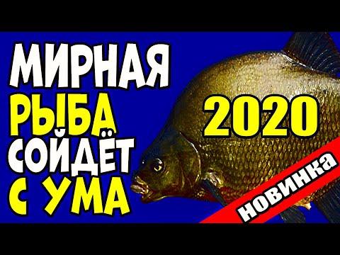 НАСАДКА СЕЗОНА 2020 для ловли ВСЕЙ МИРНОЙ РЫБЫ!