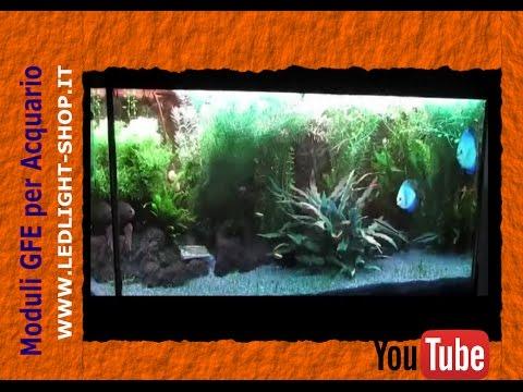 Plafoniere Led Per Acquari Marini Cinesi : Acquario led acquariofilia marino dolce luce lunare plafoniera