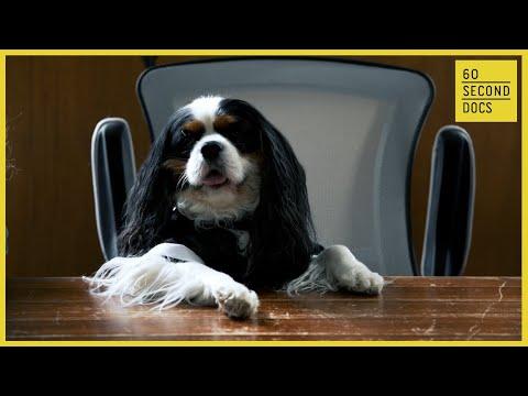 Murfee the Dog Mayor