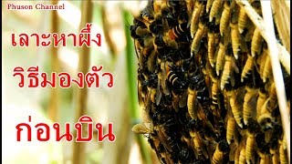 ตามผึ้งไปกับพี่มิวสายฮา