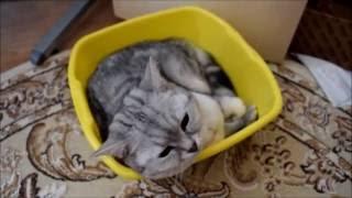Что нужно для появления котёнка в доме?