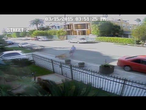 Neighborhood Battle Brews after Dogs Maul Cat