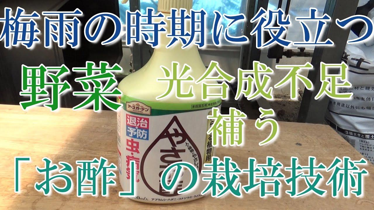 「お酢」を使った栽培技術の紹介