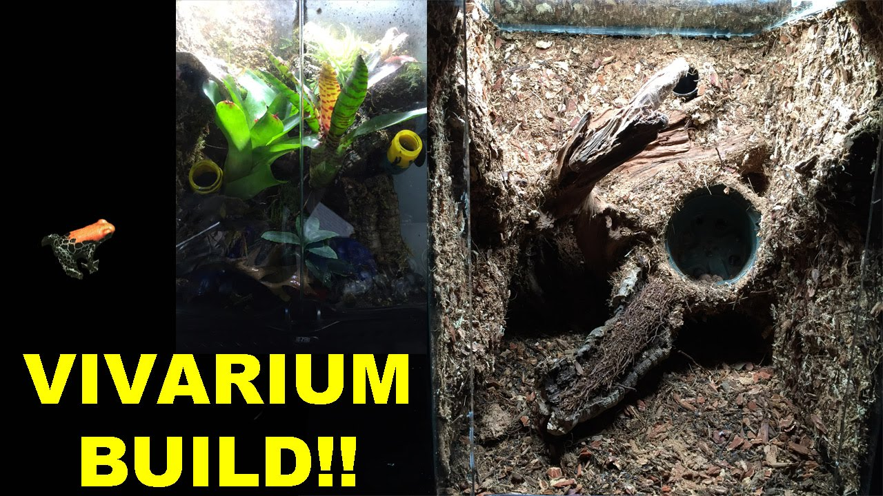 How to Build a Vivarium with a custom background!! - YouTube