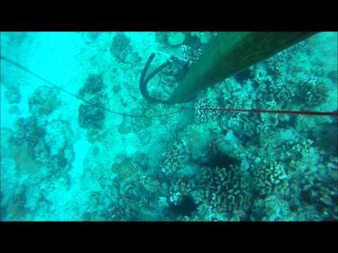Hickam Roi Dive