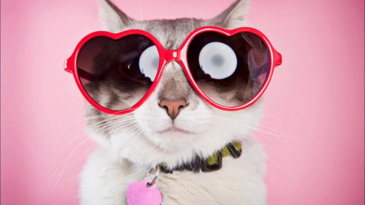 Картинки арианы, картинки с смешными котами на вайбер прикольные