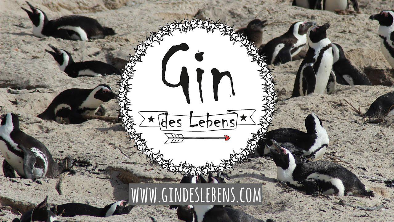 Boulders Beach Penguins South Africa | Pinguine am Boulders Beach Südafrika