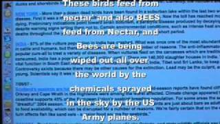 chemtrails killing birds bees