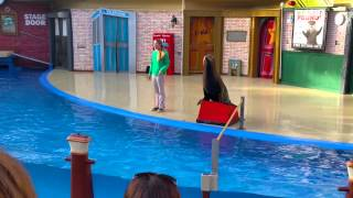 Sea world Sea Lion show Live 2015