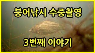 붕어낚시 수중 촬영 시즌 3 - 붕어의 이물감 (Fishing Underwater camera)