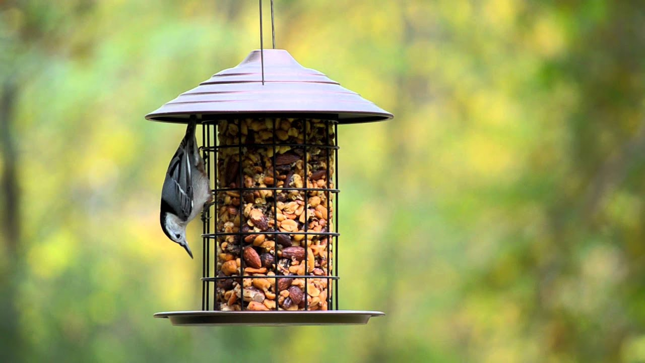 photo unlimited feeder alamy and photos to bird hanging garden stock a attract wild plastic images cheap birds peanut in seed feeders