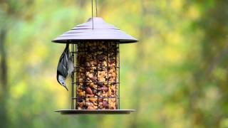 Wild Birds Unlimited - Tidy Cylinder Feeder
