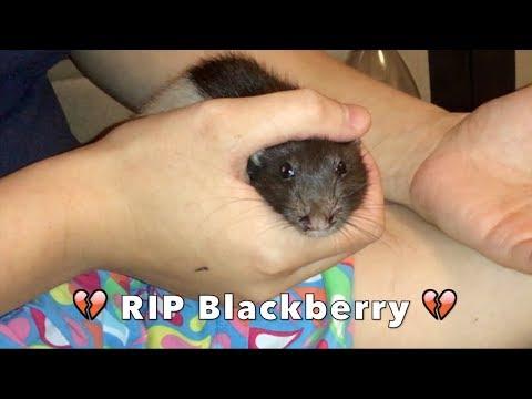 💔 Goodbye Blackberry 💔