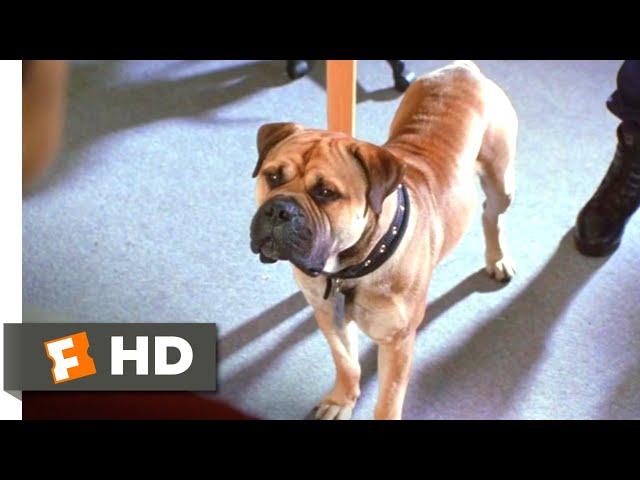 See Spot Run (2001) - We're a Team Scene (4/8) | Movieclips